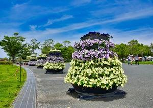 2019 浜名湖ガーデンパーク  32