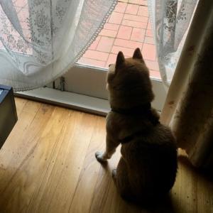 パパを待つ犬