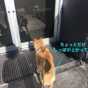 大きな犬に睨まれる中くらいの犬