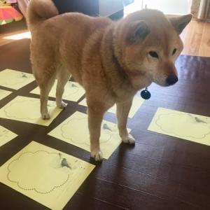 お尻スタンプをつける犬