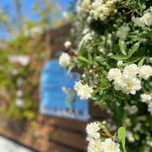 お花たちがお出迎えします