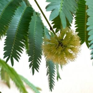 冬の室内で観葉植物を楽しむ