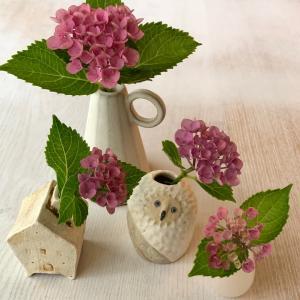 庭の紫陽花を楽しんで
