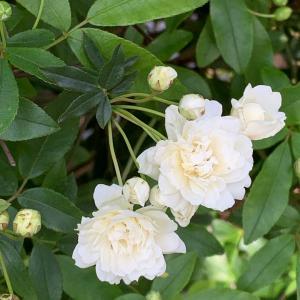 次々と咲く春の花たち