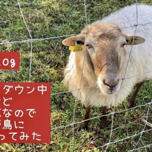【バスクVlog】セミロックダウン中だけど散歩はOKなので羊と野鳥に会いに行ってみた