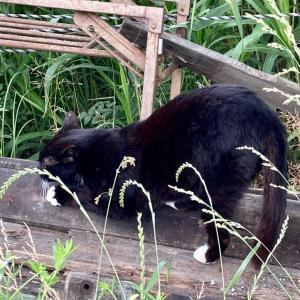 爪研ぐ黒猫