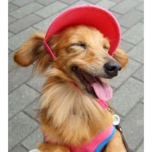 【ペット自慢】笑顔ペット写真 インスタにて受付中〜