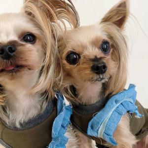 【ららぽーと豊洲】ハンドメイド犬服Ademain期間限定ショップ
