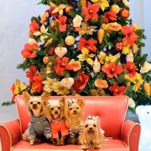 ILIO alohaクリスマスツリーで ななややちゃんと