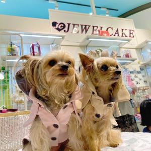 プチプラ高見え【犬服】トレンチコート JEWEL CAKE