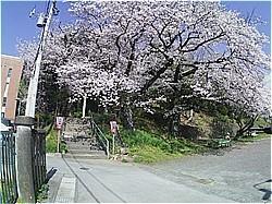 賀茂川神社は神事のみ