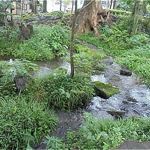 公園の湧水