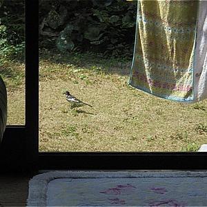わが家の庭の訪問者