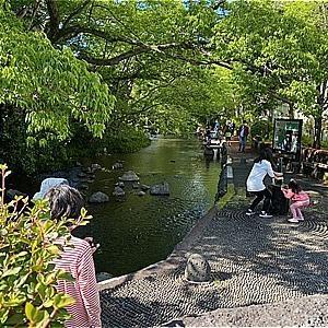 新緑の湧水川