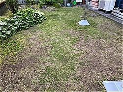 芝生のメンテ