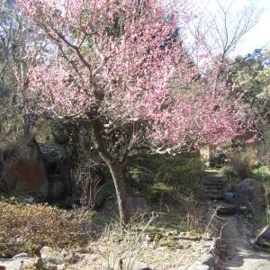 母の庭・春