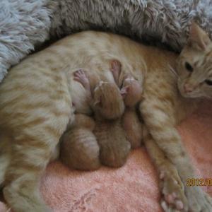 モモコ猫の幸せな朝