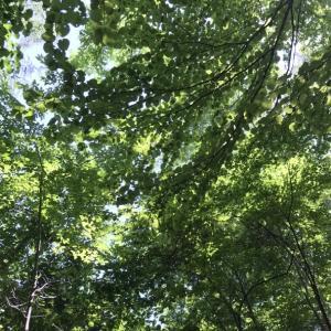久しぶりの森