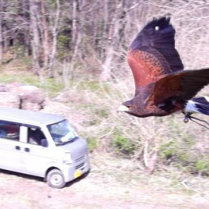 猛禽は飛ばす玩具じゃない