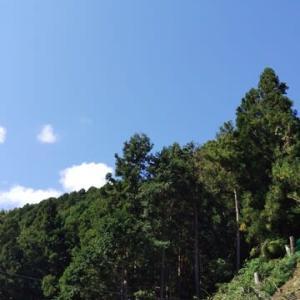 空はピーカン、気持ちはブルー。
