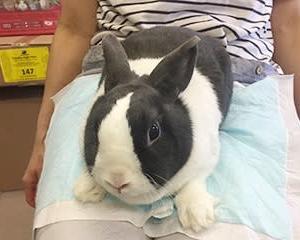 お客様のうさちゃん達☆自宅での癒しはウサギとイラストを愛でる