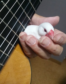 『モンちゃんのギター教室「アルハンブラの想い出」』の巻♪