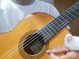 『ギターレッスン&自主練習への取り組み~コロナ対策、これでいいの?』の巻♪