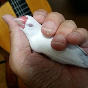 『梅雨明け後のギターレッスンに向けて頑張るよ!』の巻♪