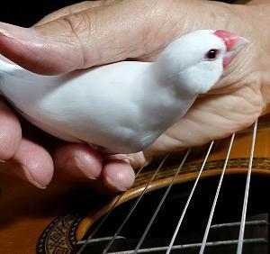 『ギターレッスン、先生の言葉を胸に復習』の巻♪