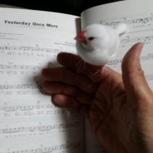 『今も、世界一爽やかな歌声カーペンターズ♡』の巻♪