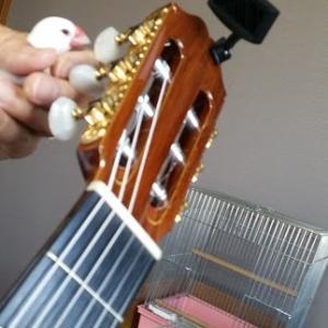 『ギター朝練~大相撲~幸せそうな寝顔♡』の巻♪
