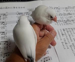 『今月最後のボランティア&ノンちゃんがギター弦に停まった!』の巻♪