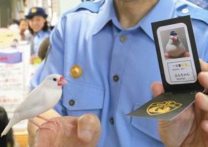 """「文鳥さんの一日警察署""""鳥""""&『はじめてのアメリカ音楽史』(その③ ゴスペル)の巻♪"""