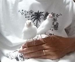 『我が家の夏の風物詩、文鳥さんTシャツ&女性カントリー歌手 リン・アンダーソン』の巻♪