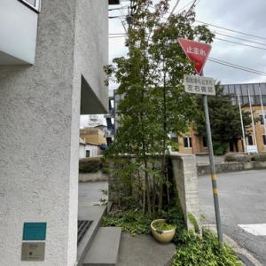 最高級神戸牛の鉄板焼き