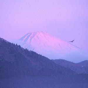 「一富士、二鷹、三七海」