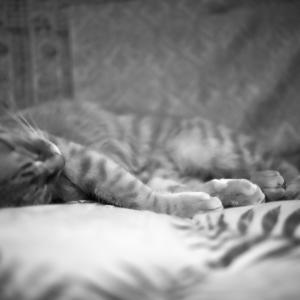 どこで寝るの