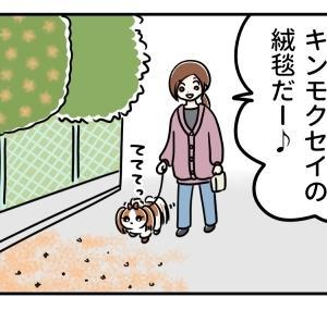 キンモクセイ☆イリュージョン