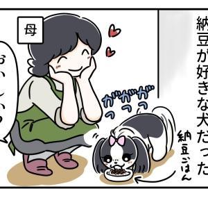 犬も大好き♪納豆ごはん 1~一代目シーズーの場合