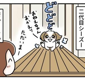 犬も大好き♪納豆ごはん 2~二代目シーズーの場合