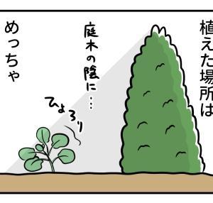 不出来な芽キャベツ 5芽キャベツ目