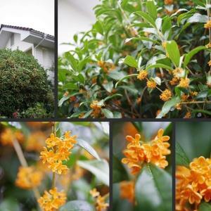 雨上がりの庭の植物達です!