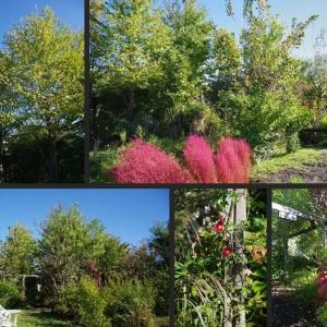 今日の庭の風景です!