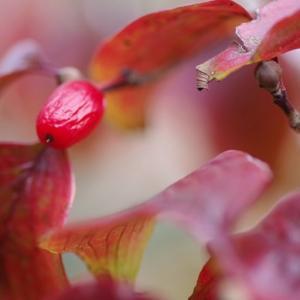 晩秋の彩を撮影してみました その2!