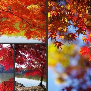 井頭公園の紅葉を観に行ってきました!