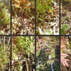 雑木の庭の下草刈りや落葉集め等の整備をしました!