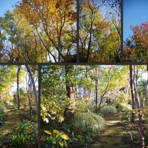 雑木の庭とボーダーガーデンの風景です!