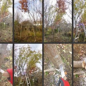 雑木の庭の樹木伐採や剪定をしました!