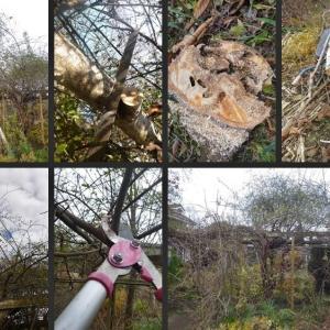 白樺の伐採やアジサイ類の剪定等ボーダーガーデンの整備をしました!