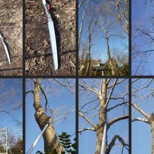 高所部分の樹木剪定をしました!